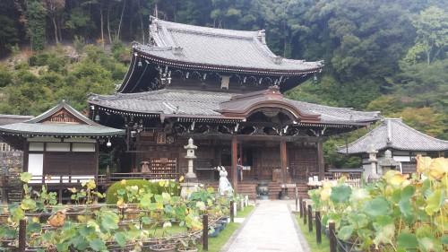 Uji is home to mimurotoji temple, tea, and a Museum