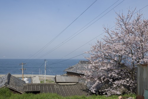 Megijima, part of the Setouchi art Festival, cherry blossoms