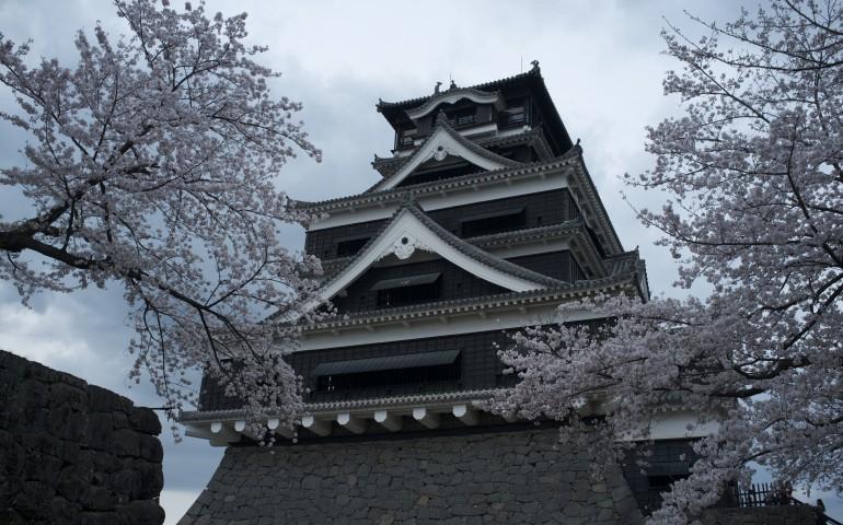 kumamoto,castle,hanami,cherry blossoms,history,spring