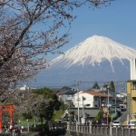 Top 3 Cherry blossom viewing spots in Fujinomiya