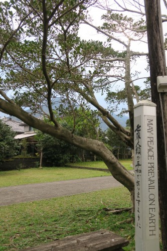 signpost next to tree