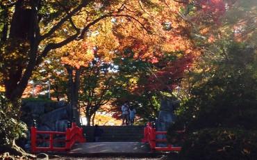 Castle, Park, Garden, Hanami, Cherry Blossom