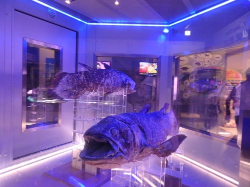 Inside the Coelacanth Museum, eerie shots of the fish!