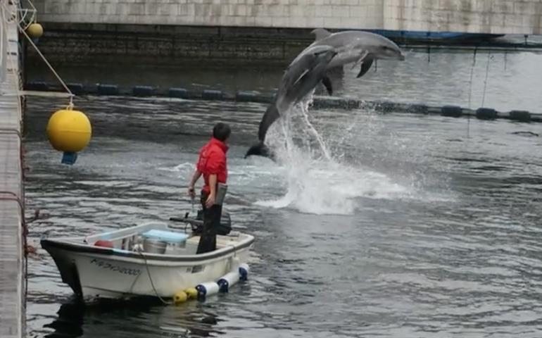 Kagoshima, aquarium, Yakushima, dolphin, dolphins, port