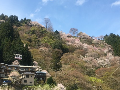 Mount Yoshino, scenic cherry blossoms all over the mountain