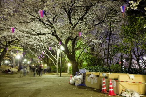 Tons of garbage near the sakura during ohanami in Japan.