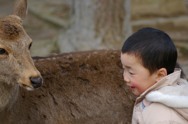 No need holding etiquette deer with this Japanese greeting