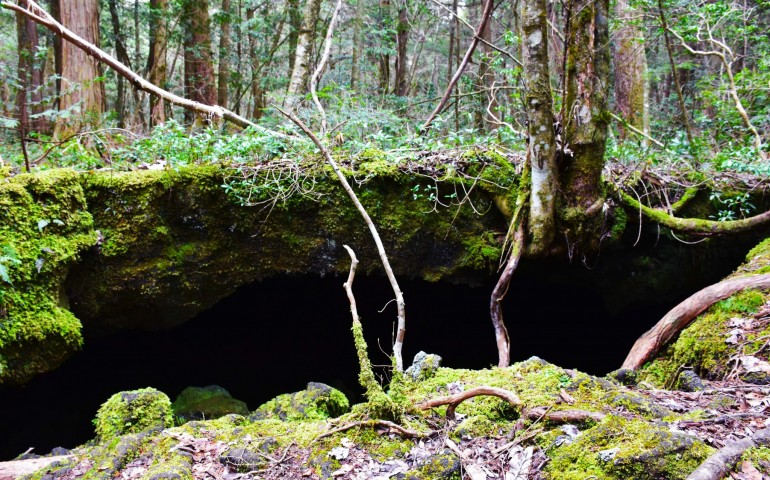 Cave in the forest of Aokigahara found while hiking.