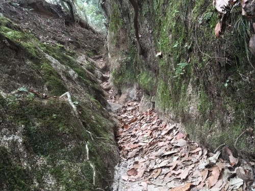 Mt. Hiei Hiking Trail Kyoto Prefecture Shiga Nature Lake Biwa View Enryaku-ji Temple