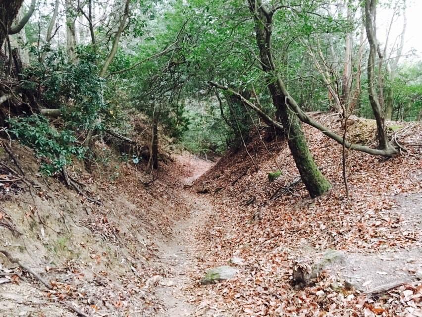 Hiezan trail opens