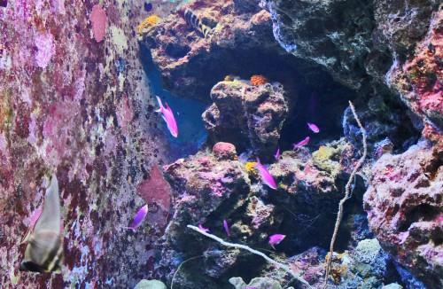 Underwater in Blue cave, Maeda point