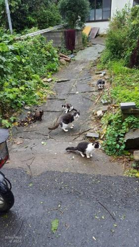 the legendary cat island in Tashirojima Japan is home to many cute cats