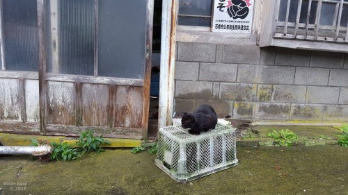 cats freely room the streets of Nitoda Port as well as Tashirojima Japan