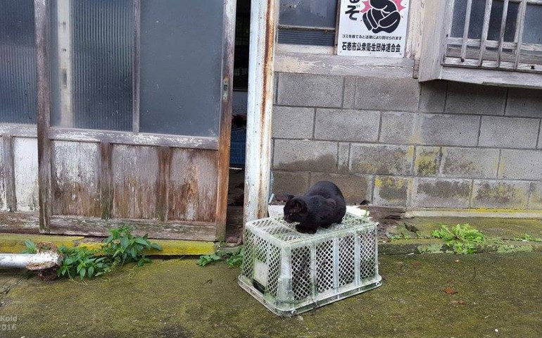 cats,island,miyagi,tashirojima