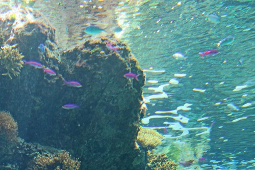 Underwater in Maeda cape!