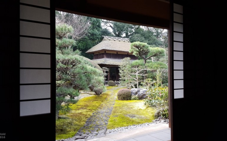 temple,tea,nara,ceremony,matcha,zen,buddhism
