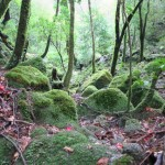 Yakushima's Shiritani Unsuikyo or 'Princess Mononoke Forest'