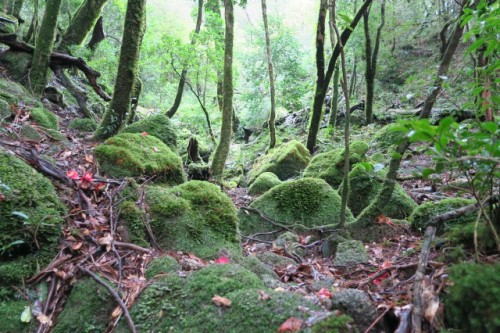 The Shiratani Unsuikyo Ravine, Shiratani Unsuikyō) on Yakushima is a lush, green nature park