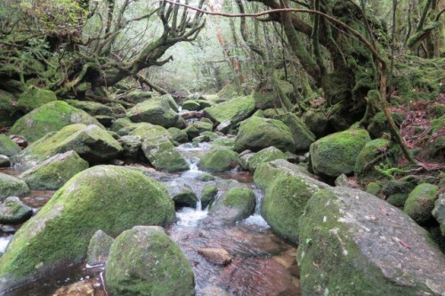 An amazing view in Yakushima