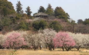 Kairakuen garden in Ibaragi prefecture for cherry and plum blossom