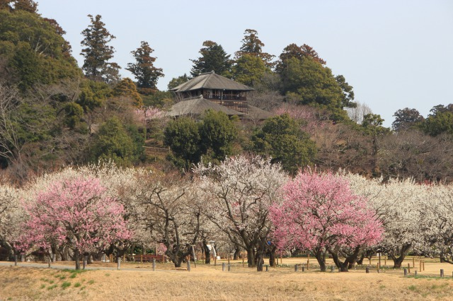 Kairakuen garden in Ibaragi prefecture for cherry and plum blossom