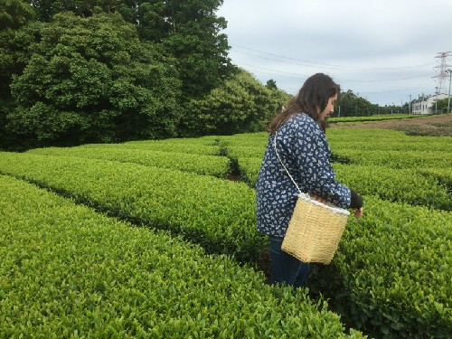 This is the green tea farm!