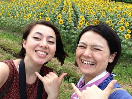The sun flower fields to enjoy, in northern Kyoto, Japan.
