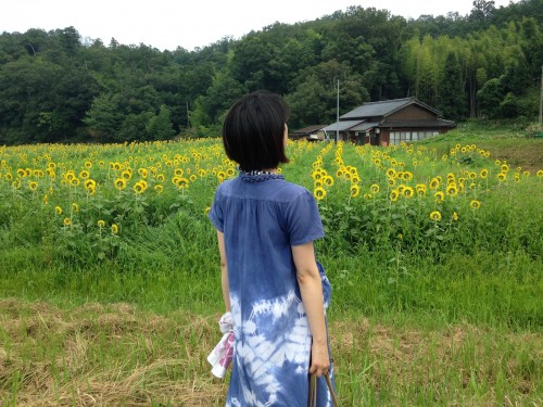 The sunflower fields in northern Kyoto, Japan.