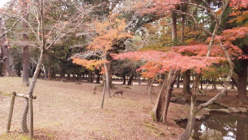 Changing of the leaves in Nara park is one of the also things you should not miss