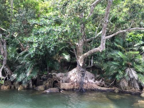 beautiful watery hikes on Iriomote Island