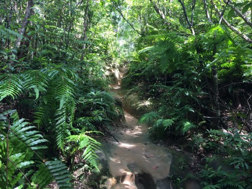 Iriomote Island jungle hikes