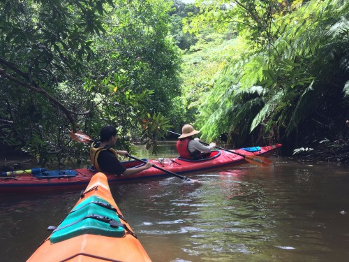 Fun kayak excursion on Iriomote Island