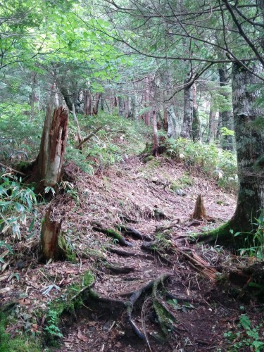 Mount Kisokoma in Nagano prefecture: Woodland and nature view