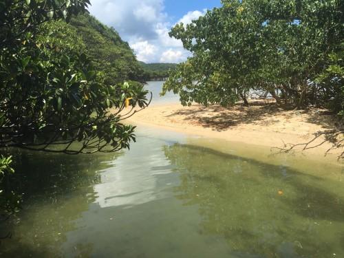 Iriomote Island mangroves