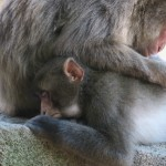 Wild Monkeying around in Oita!