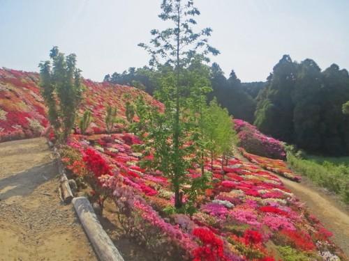 The Matsumoto Azaleas Park in Nagasaki, Kyushu, Japan