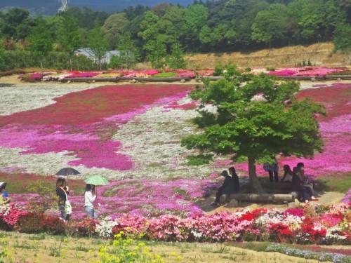 The Matsumoto Azales Park in Nagasaki, Kyushu, Japan