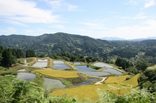 Terraced Rice Fields of Yamakoshi, Niigata prefecture, Japan.