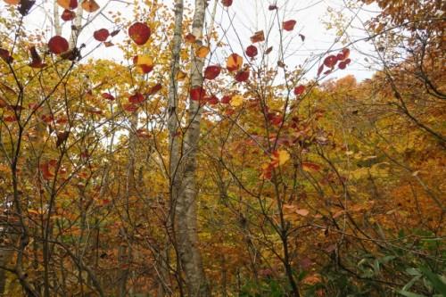 beautiful autumn colour !