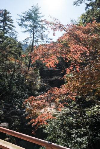Miyajima-Budget-06542