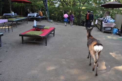 Deer Miyajima