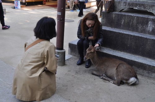 pictures with deer miyajima
