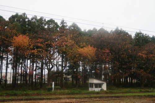 Autumn leaves scenery in Murakami city