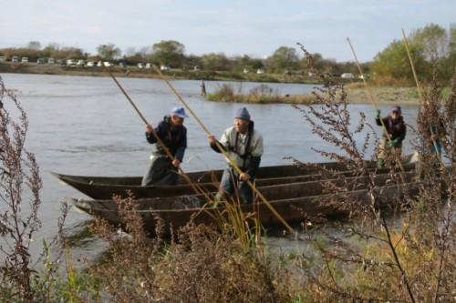 Iguri-ami Ryo method, the traditonal method to catch the salmons