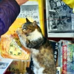 Exploring The Cat Island in Karatsu!