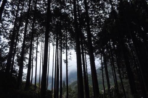 The forests in Imari yaki