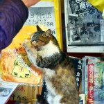 Exploring The Cat Island in Karatsu!