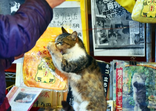 cat island in Karatsu