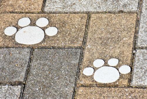 paw-marks cat island