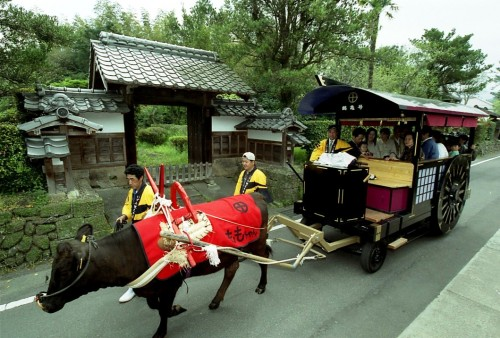 Ox carriage ride in Izumi city
